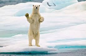 Svalbard: il vicino di casa saluta.