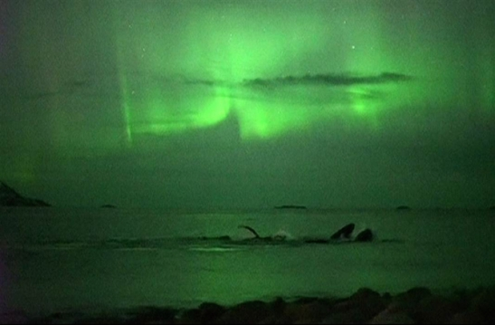 dnews-files-2015-10-whales-under-Northern-Lights-151009-jpg
